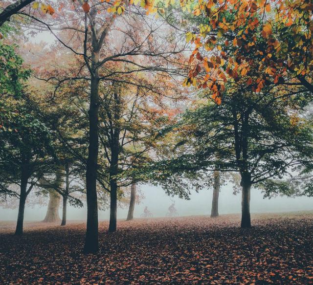Greenwich Park v2
