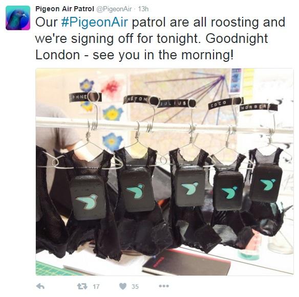 pigeon tweet