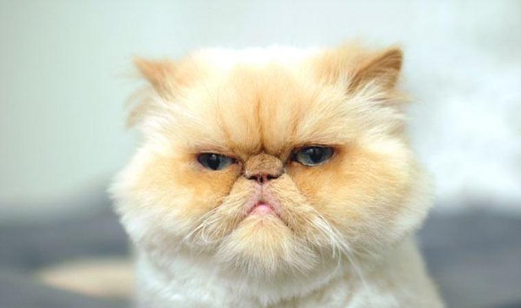 grumpier-cat